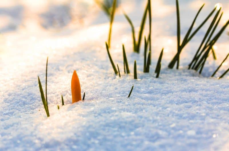 ways-to-protect-your-garden-against-snow-and-ice-damage-2-stay-off-the-grass