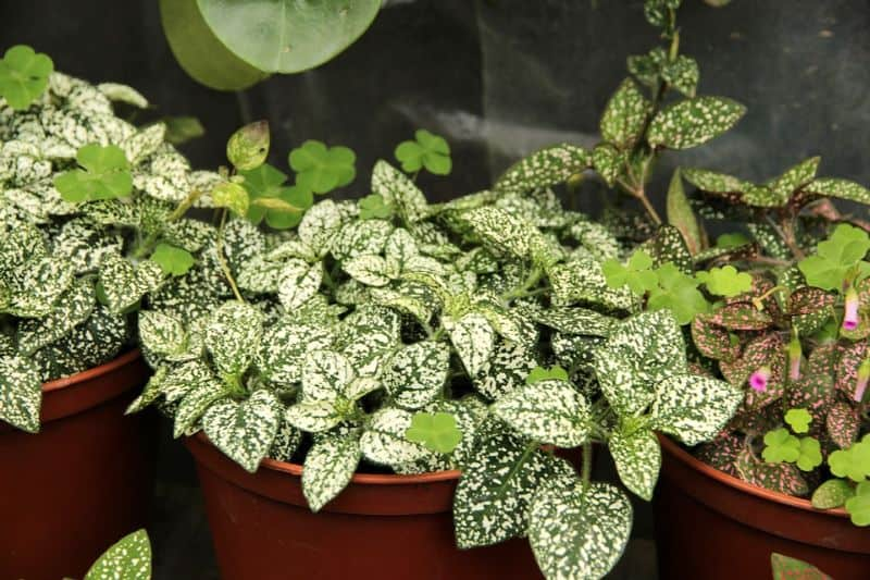 ways-to-protect-your-garden-against-snow-and-ice-damage-5-bring-plants-in