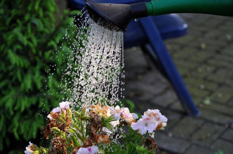 ways-to-protect-your-garden-against-snow-and-ice-damage-6-dont-forget-to-water