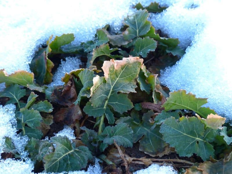 ways-to-protect-your-garden-against-snow-and-ice-damage-9-vegetable-patch